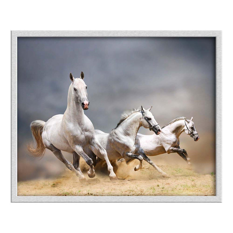 Obraz Konie 43 Cm X 53 Cm Kupuj W Obi