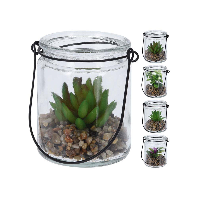 Roślina W Szkle Wys10cm Mix Kupuj W Obi