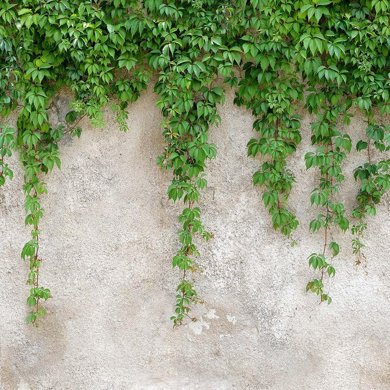 Alfa Cer Panel Szklany Ivy Liście Na ścianie 60 Cm X 60 Cm