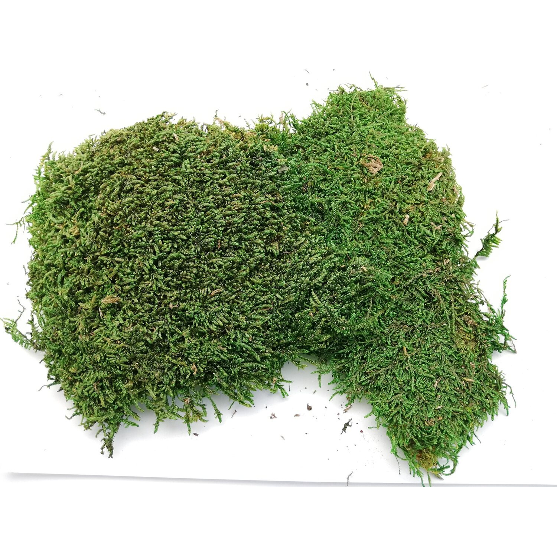 Mech Zielony Konserwowany 250 G