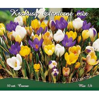 Krokus Crocus Botanical Mix 50szt