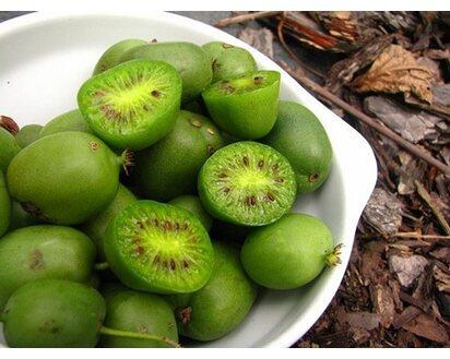 Aktinidia Kiwi W Odmianach Actinidia Sp