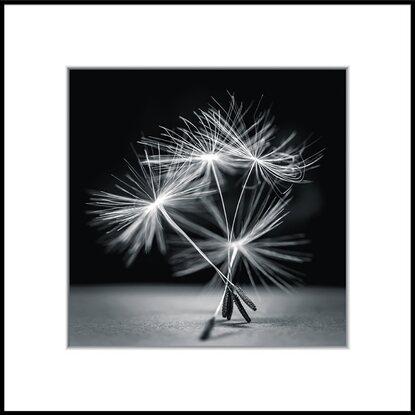 Obraz ArtBox AB007 Dandel