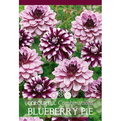 Dalie Blueberry Pie