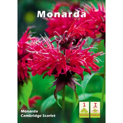 Monarda Cambridge Scarlet 1szt