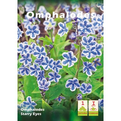 Omphalodes Starry Eye s 1szt
