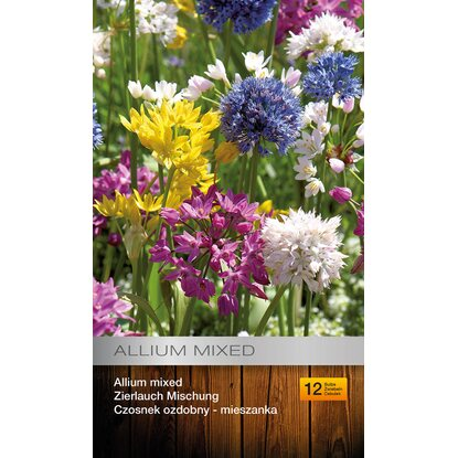 Allium 12szt mix