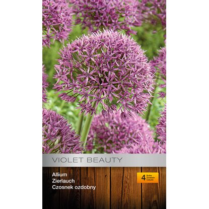 Allium Violet Beauty 4szt