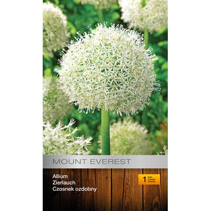 Allium Mount Everest 1szt