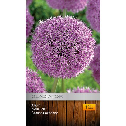Allium Gladiator 1szt
