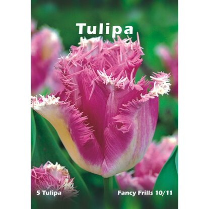 Tulipan odm. Fancy Frills (Tulipa sp.)