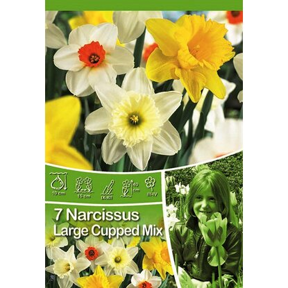 Narcyz mix odmian (Narcissus sp.)