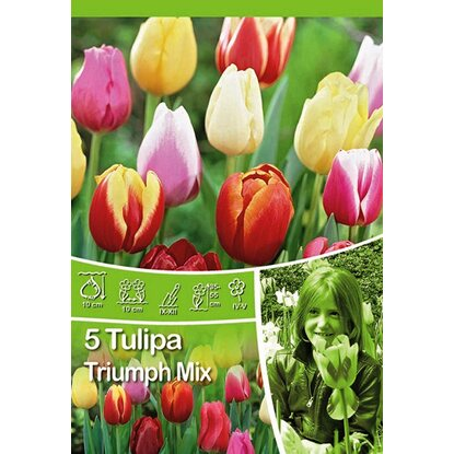 Tulipan Trimph mix (Tulipa sp.)