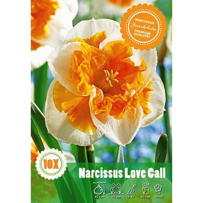 Narcyz odm. Love Call (Narcissus sp.)