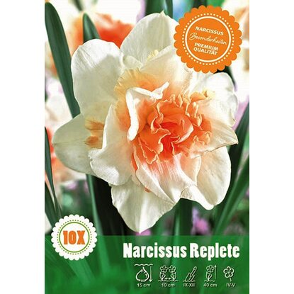 Narcyz odm. Replete (Narcissus sp.)