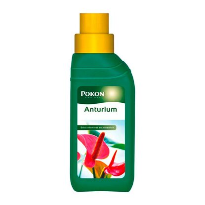 Pokon Nawóz do anturium 250 ml