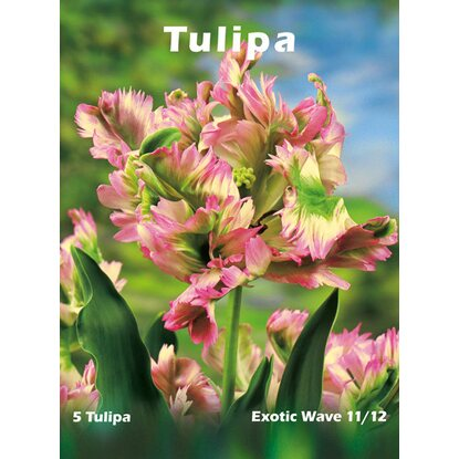 Tulipan odm. Exotic Wave (Tulipa sp.)