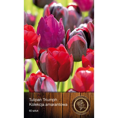 Tulipan Dark mix 20szt