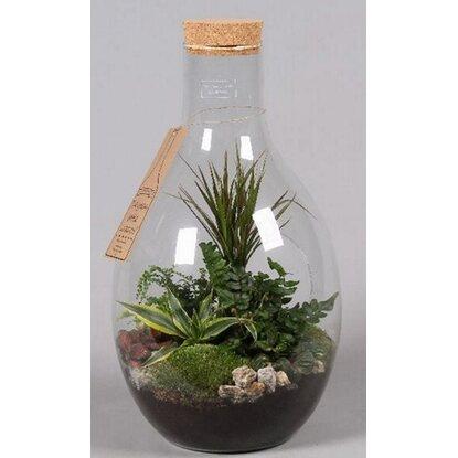 Kompozycja w szklanej butelce - mix 5 roślin doniczkowych, wys. 55 cm.