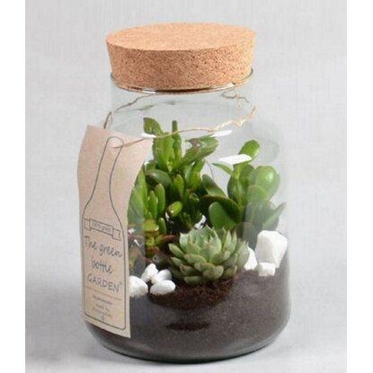 Kompozycja w szklanym słoju z sukulentami - mix roślin wys. 32 cm.