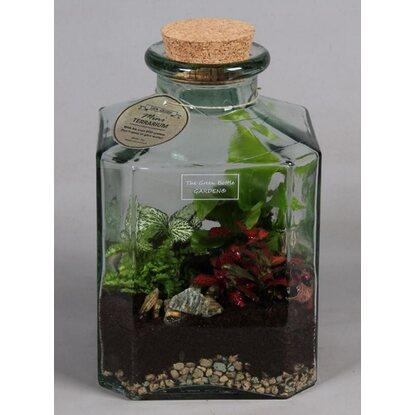 Nowoczesna kompozycja - mix 5 roślin doniczkowych w szklanym słoju, wys. 29 cm.