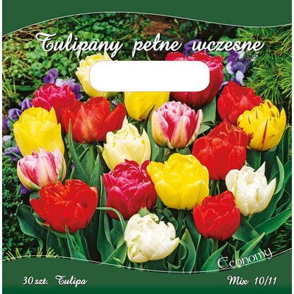 Tulipan Double Early 30szt